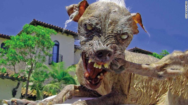130621161004-sam-the-worlds-ugliest-dog-horizontal-gallery